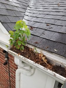 DeWitt Downspout and Gutter Cleaning